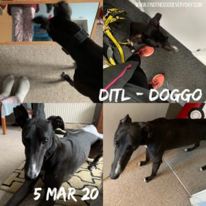 Day in the Life - 5th March 2020 - dog photos
