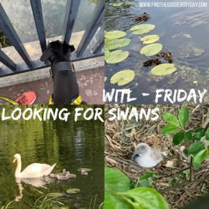 Week in the Life: Friday - looking for swans (we found some ducklings too!)