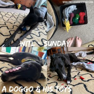 Week in the Life: Sunday - a doggo and his toys