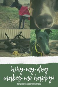 Why my Dog Makes Me Happy pin image
